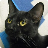 Adopt A Pet :: Fantasia - Greenville, IL