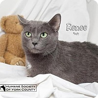 Adopt A Pet :: Renee 5562 - Fort Mill, SC