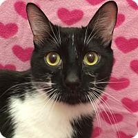 Adopt A Pet :: Enzo - Colorado Springs, CO
