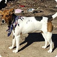 Adopt A Pet :: Julie* - Baileyton, AL