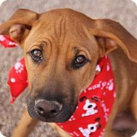 Adopt A Pet :: Garth - Phoenix, AZ