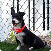 Adopt A Pet :: Wanda - Bradenton, FL