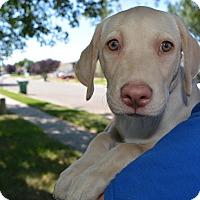 Adopt A Pet :: Tawny - Ogden, UT