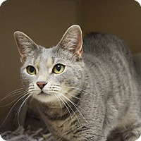 Adopt A Pet :: Ellie - Pottsville, PA