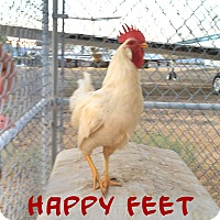 Other for adoption in California City, California - Happy Feet