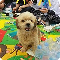 Adopt A Pet :: Chubby - Oakton, VA