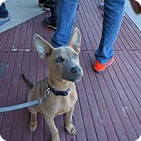 Adopt A Pet :: CHARLIE - Von Ormy, TX