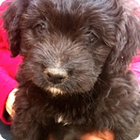 Adopt A Pet :: Becky - Simi Valley, CA