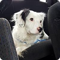 Adopt A Pet :: JoJo - Charlotte, NC