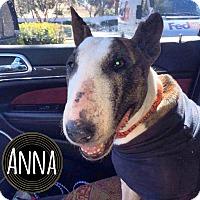 Adopt A Pet :: Anna - Lake Worth, FL