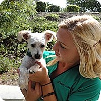 Adopt A Pet :: Kobe - Mission Viejo, CA