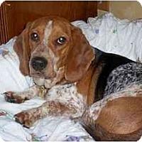 Adopt A Pet :: Brickle - Novi, MI