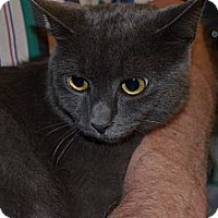 Adopt A Pet :: Blue Bell - N. Berwick, ME