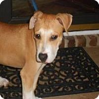 Adopt A Pet :: ANDY - Raleigh, NC