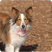 Adopt A Pet :: Sugar Plum - Ft. Myers, FL
