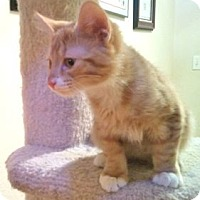 Adopt A Pet :: K-Stephanie1-Stephen - Colorado Springs, CO