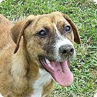 Adopt A Pet :: Kenley - Huntingburg, IN