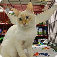 Adopt A Pet :: Sparkle - Redondo Beach, CA