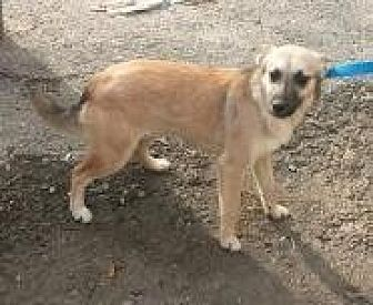 German Shepherd Dog Mix Dog for adoption in Prestonsburg, Kentucky - Lonna