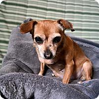 Adopt A Pet :: Mackenzie - Chicago, IL