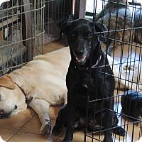 Adopt A Pet :: Iris - Pomerene, AZ
