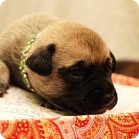 Adopt A Pet :: Organa - Greensboro, NC