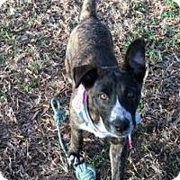Adopt A Pet :: Celeste - Albany, NY
