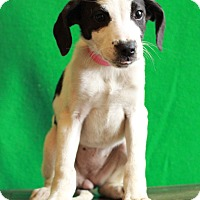Adopt A Pet :: Venus - Waldorf, MD