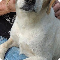 Adopt A Pet :: Ellie May - Joplin, MO