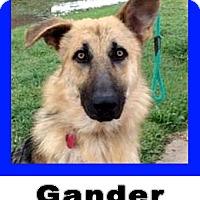 Adopt A Pet :: Gander - Wichita Falls, TX