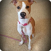 Adopt A Pet :: Sadie ~ Adoption Pending - Youngstown, OH