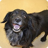 Adopt A Pet :: S/C Moses - Miami, FL