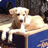 Adopt A Pet :: Sprite - Adoption Pending - Gig Harbor, WA