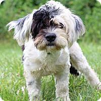 Adopt A Pet :: Rico - Waldorf, MD