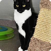 Adopt A Pet :: Chelsea - Princeton, MA