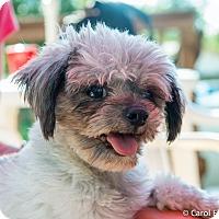 Adopt A Pet :: Blip - Bristol, CT