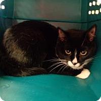 Adopt A Pet :: Oreo - St Augustine, FL
