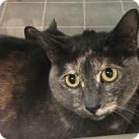 Adopt A Pet :: Buttercup 014D - Columbus, GA