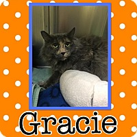 Adopt A Pet :: Gracie - Edwards AFB, CA