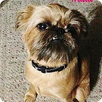 Adopt A Pet :: MADI in Dallas, TX - Austin, TX