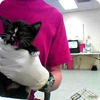Adopt A Pet :: MOONPIE - Conroe, TX