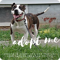 Adopt A Pet :: Mocha - Burlington, NC