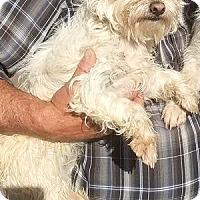 Adopt A Pet :: Blake-ADOPTION PENDING - Boulder, CO