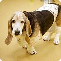 Adopt A Pet :: Matilda - Whittier, CA