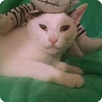 Adopt A Pet :: BUB - Bayside, NY