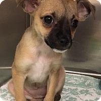 Adopt A Pet :: Ali - Fort Collins, CO