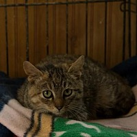 Adopt A Pet :: Charlotte (COURTESY) - Lovingston, VA