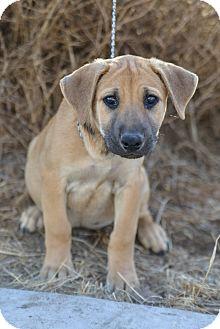 FINN   Adopted Puppy   4Paws/Fin/Shepherd ...