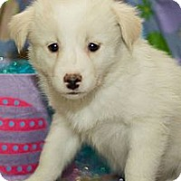 Adopt A Pet :: Flurry - Saskatoon, SK
