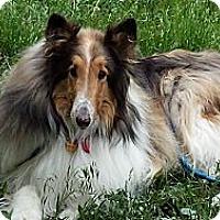 Adopt A Pet :: Sahara - Pueblo West, CO
